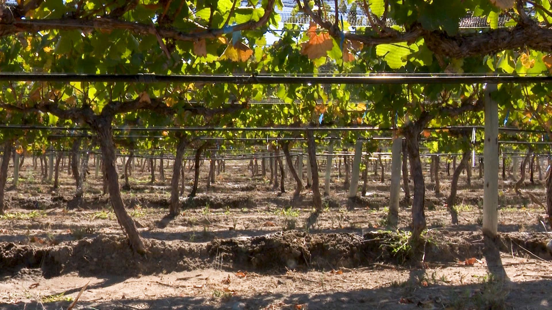 A partir de la nueva medida provincial, se toman precios referenciales del vino para desarrollar el modelo
