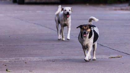 Hay muchos perros que hoy están abandonados y no tienen un hogar (Shutterstock)
