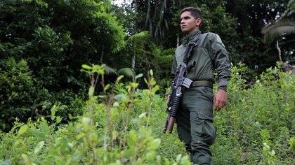 FOTO DE ARCHIVO.  Un policía anti narcóticos vigila un cultivo de hoja de coca durante un operativo de erradicación enTumaco, Colombia. Febrero, 2020.  REUTERS/Luisa Gonzalez