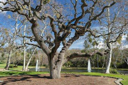 Neverland Ranch se renombró como Sycamore Valley Ranch y se puso en el mercado por USD 100 millones en 2015. Su nombre hace honor a las ondulantes colinas, los majestuosos árboles de sicómoro, los magníficos robles y los terrenos por los que el Valle de Santa Ynez es conocido