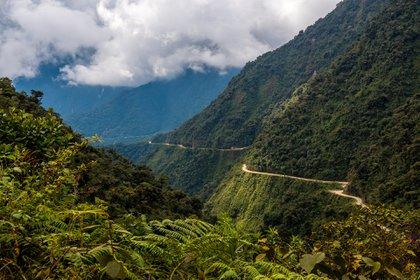 Hermanas selva yungas de Tucumán (Shutterstock)