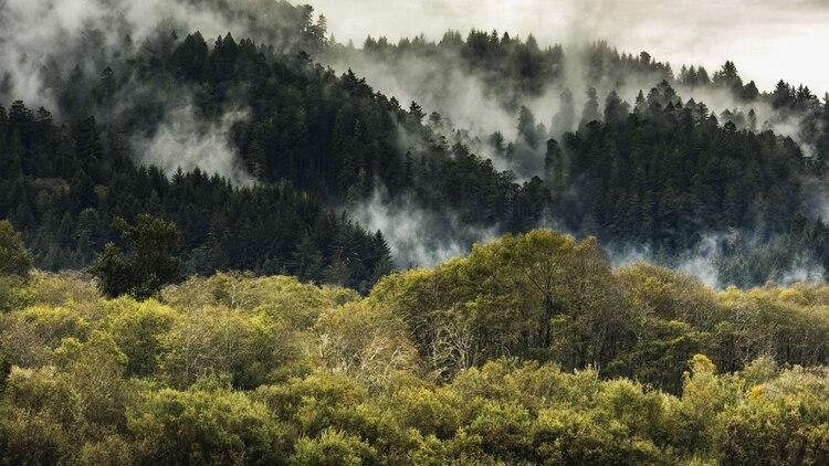 Ecosia dedica el 80% de sus ganancias a reforestar zonas que lo necesitan (Foto: Ecosia)