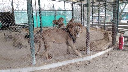 Así están algunos de los animales del zoológico (Defensoría de la provincia de Buenos Aires)