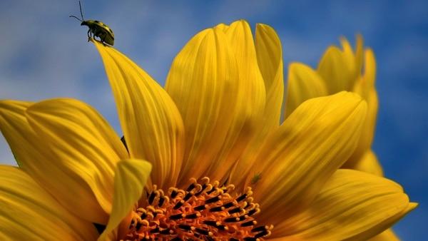 El exterminio de insectos en Alemania preocupa a la comunidad científica: disminuyeron un 76% desde 1989