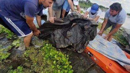 En Santiago del Estero se hallaron restos de un gliptodonte, pertenecientes al género Panochthus sp. (Télam 27012021)