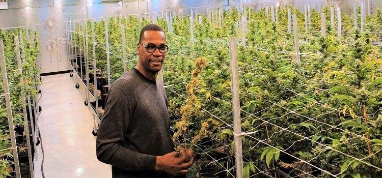 Cliff Robinson, en una plantación de cannabis