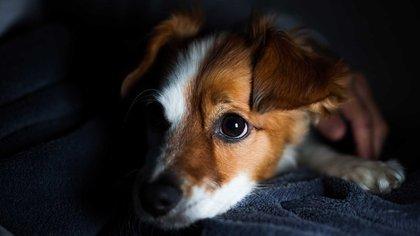 Sus celos están reservados sólo para las cosas que consideran una amenaza (Foto: Shutterstock)