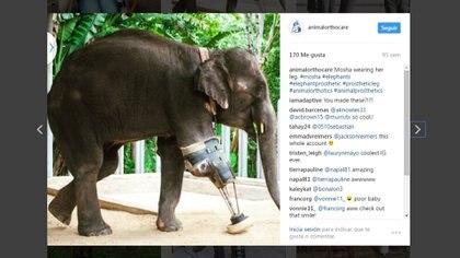 En sus redes sociales, da testimonio de como le transformó la vida a los animales que ayudó (Instagram de Derrick Campana)