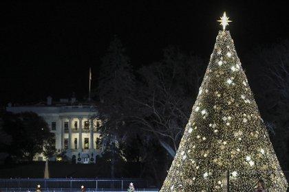 En Washington DC,  EEUU, el Árbol de Navidad Nacional iluminado durante una noche cerrada, en la capital estadounidense. Mide nueve metros y posee 50.000 luces y 450 estrellas