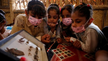 Iraqi children look at a display box of mounted insects in Darbunah restaurant in Baghdad, Iraq November 16 2020. Picture taken November 16, 2020. REUTERS/Saba Kareem TPX IMAGES OF THE DAY