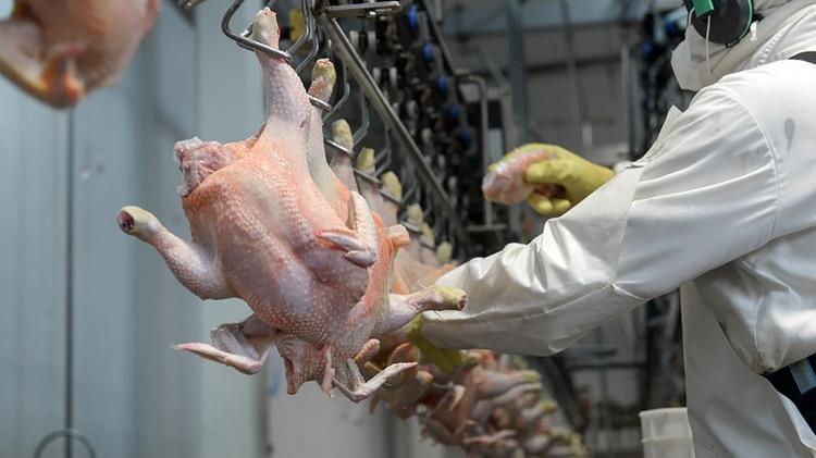 La carne de pollo sigue siendo la segunda carne más elegida detrás de la bovina