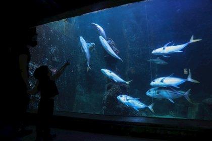 El acuario de San Pablo reabrió sus puertas este sábado aunque con algunas limitaciones por la pandemia (EFE/Fernando Bizerra)