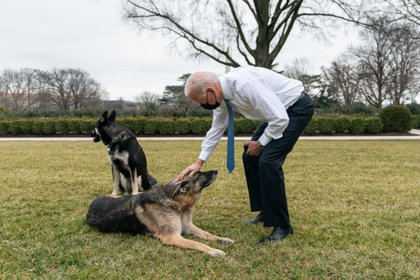 Dogs move into White House four days after Joe Biden wins presidency Photo: (Adam Schultz Official White House)