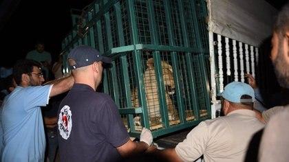 Los afortunados ejemplares se encuentran ahora en el centro de protección de Karacabey, en Turquía, a la espera de ser transferidos próximamente a Jordania (Four Paws)