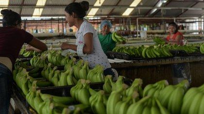 Las exportaciones favorecen a entidades sobre todo en el sur y sureste de México, incluido Tabasco (Foto: Cuartoscuro)