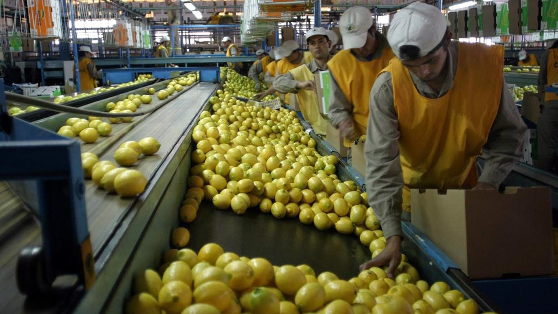 Comienza la auditoría de la Unión Europea, con el objetivo de volver a autorizar el ingreso de limones y naranjas provenientes de la Argentina