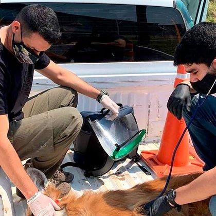 Luego de recibir primeros auxilios en el lugar fue trasladado a una clínica veterinaria, donde se encuentra fuera de peligro (@Nora Cano)