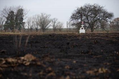 Las secuelas de los incendios en el Delta del Paraná, en la zona de Rosario. (Foto: Franco Fafasuli)