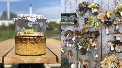 """""""Los insectos, aves y animales, incluidos los primates, se sienten atraídos por el olor y el sabor del fermento"""""""