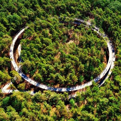Este estadio de 700 metros de largo en Bosland lleva a los visitantes por una carretera de circunvalación alrededor de un bosque gigantesco, con un camino que también está abierto y accesible para caminantes y corredores (Visit Limburg)