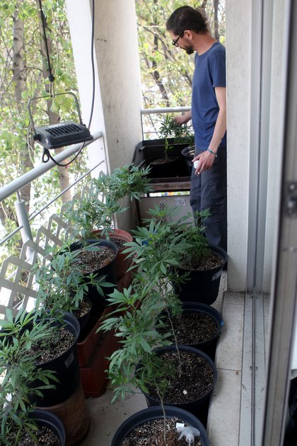 Cultivo de plantas de cannabis en el balcón de José, cuenta con una pequeña lámpara que alimenta con luz a las plantas durante pocas horas en la noche. Ciudad de México, abril 29, 2021. Foto: Karina Hernández / Infobae