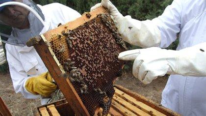 En septiembre, 500 millones de abejas murieron en Brasil (Archivo)