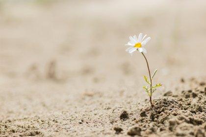 No podemos modificar los acontecimientos o adversidades que ocurren, pero sí podemos decidir qué actitud vamos a tomar frente a ellos (Shutterstock)