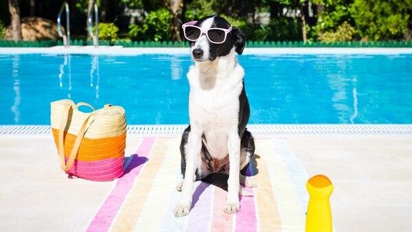 Hay razas de perros que les gusta el agua más que a otras y no dudan en meterse a la pileta (IStock)