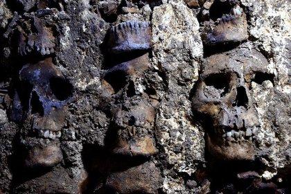 Una fotografía muestra la sección de una torre azteca que se cree forma parte del Huey Tzompantli, una enorme variedad de cráneos en un círculo que infundió miedo a los conquistadores españoles cuando tomaron la ciudad bajo el mando de Hernán Cortés, en el sitio arqueológico del Templo Mayor, en Ciudad de México Foto: (Reuters/Inah)