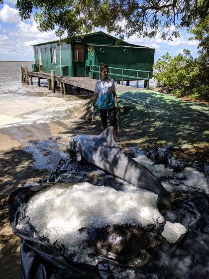 Delfín varado. Proyecto Botos, Laguna de los Patos, archivo del proyecto