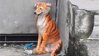 La tintura, que en algunos casos es la misma que se utiliza en humanos, daña el pelaje y quema la piel de los animales