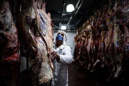 Recientemente, Aduana había establecido precios de referencia para la exportación de cortes de carne vacuna, de cerdo, arándanos, leche en polvo, cebolla, papa, pasas de uva y corvina. EFE/Juan Ignacio Roncoroni