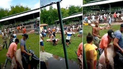 Video: Decenas de personas saquearan criaderos porcinos y avícolas en el Cauca