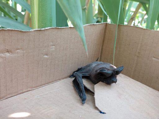 Animales rescatados (Foto: Profepa)
