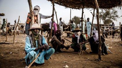 Un pastor fulani en Sokoto, Nigeria, donde reside la mayor población de este grupo étnico (Foto de Luis TATO / AFP)