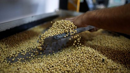 Las retenciones a la soja quedaron en 30%, según el decreto publicado hoy en el Boletín Oficial