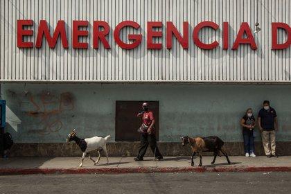 Un hombre camina junto a sus cabras frente al Hospital San Juan de Dios, donde se atiende a pacientes de coronavirus (EFE/Esteban Biba/ archivo)