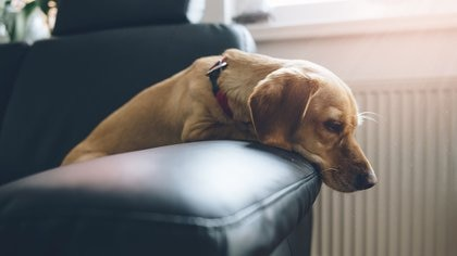 Cada año nuevo los dueños de las mascotas deben tener sumo cuidado para que sus mascotas no reaccionen y tengan traumas en el futuro (Istock)