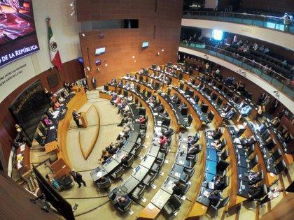 La Comisión para la Igualdad de Género del Senado mexicano, así como senadoras, diputadas y legisladores del Congreso de la Ciudad de México llamaron a los congresos locales a no aprobar leyes contrarias a la educación científica, laica e inclusiva. (Foto: EFE/Madla Hartz)