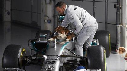 Lewis Hamilton junto a Roscoe en su monoplaza de Mercedes