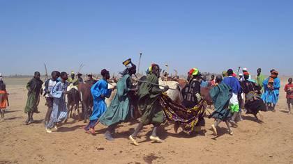 La imagen muestra una danza de fulanis con sus bueyes en Mali. Una escena cada vez menos habitual por el estaillido de la violencia
