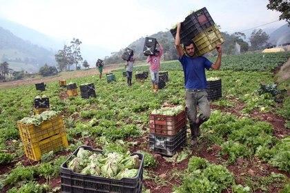 El decreto presidencial referente a las medidas de austeridad afectará al sector agropecuario. Foto: REUTERS/Carlos Eduardo Ramírez.