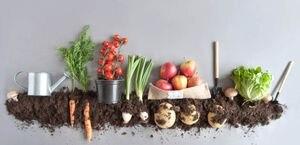 Día de la Tierra: los secretos del paso a paso para hacer compost en casa