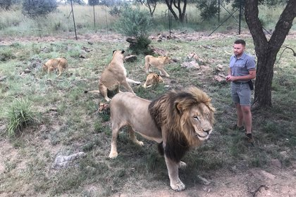 Una manada de leones en un parque en África (Reuters/ Tim Cocks)