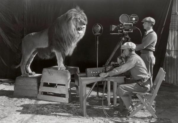 """El """"backstage"""" del famoso rugido del león"""