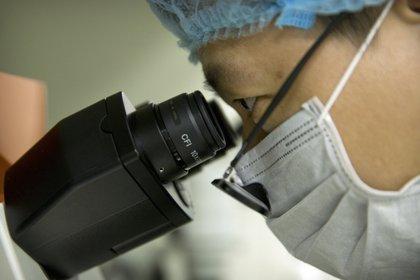 En esta fotografía del 9 de octubre de 2018, Qin Jinzhou mira a través de un microscopio en un laboratorio en Shenzhen en la provincia de Guangdong, en el sur de China. Qin labora con el científico He Jiankui, quien dice haber ayudado a crear los primeros bebés con edición genética en el mundo. (AP Foto/Mark Schiefelbein)