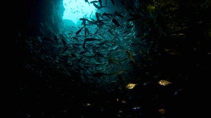 Viaje al universo acuático lejano: cuáles son los puntos más profundos de cada uno de los 5 océanos