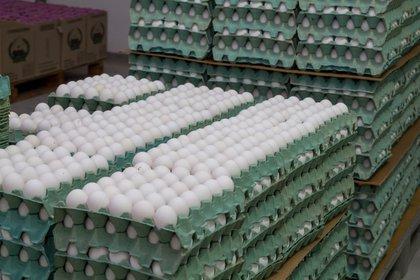 Desde el sector avícola alertaron por las trabas impuestas por provincias y municipios, en medio de la cuarentena obligatoria para combatir al coronavirus