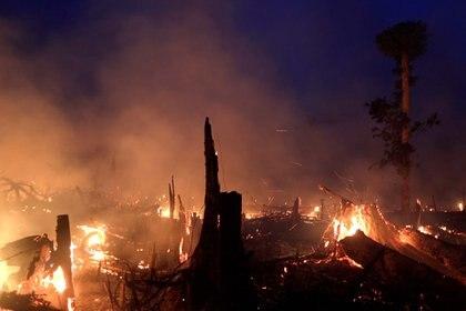Miles de árboles quedaron destruidos por el fuego