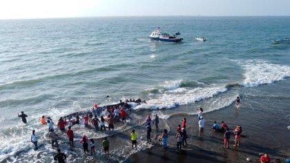 La corriente llevó a la ballena hasta la costa